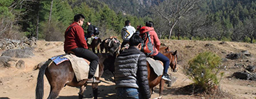 hourse-riding-to-tigers-nest
